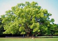 Отпусти дерево
