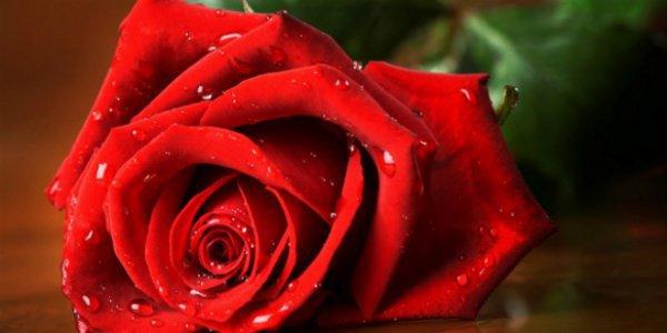 Как сильно жены ревновали Пророка (с.г.в)? Гнев и ревность в Исламе