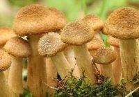 Можно ли по Исламу есть грибы?