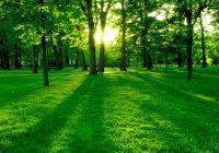 Почему зеленый цвет особенно любим мусульманами?