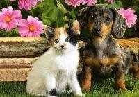 Допустима ли стерилизация животных?
