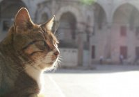 Можно ли Мусульманам держать дома кошку?