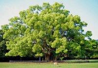 Чем был плод запретного дерева, который вкусил Адам (а.с.)?