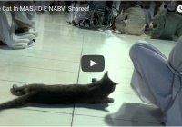 Видео дня: кошки в мечетях мира
