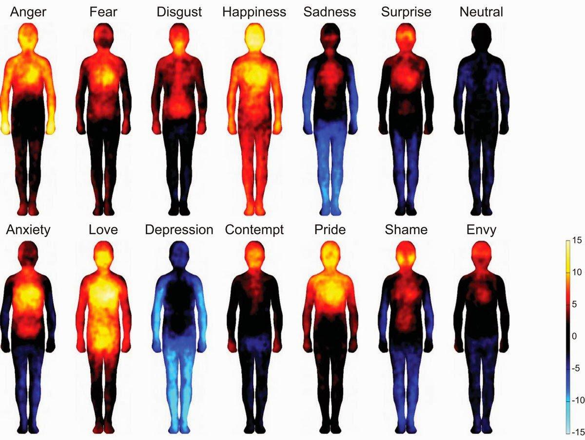 Тепловые карты эмоций человека.Теплые цвета показывают области, где люди чувствовали возбуждение во время эмоции, а холодные цвета – неактивные области.