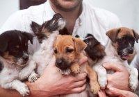 10 животных, которые попадут в Рай