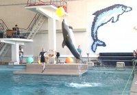 В преддверии месяца Рамадан мусульмане организовали для детей поход в дельфинарий