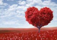История любви: Мухаммад и Хадиджа