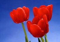 Три вещи, любимые Аллахом