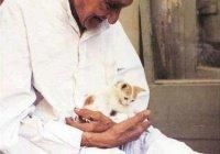 Братья наши меньшие: предписания ислама по отношению к животным