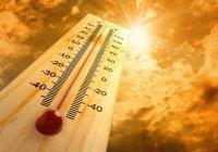 В Египте жара за 4 дня убила 60 человек