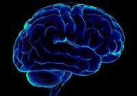 """Ученые: ложь меняет """"вид"""" мозга"""