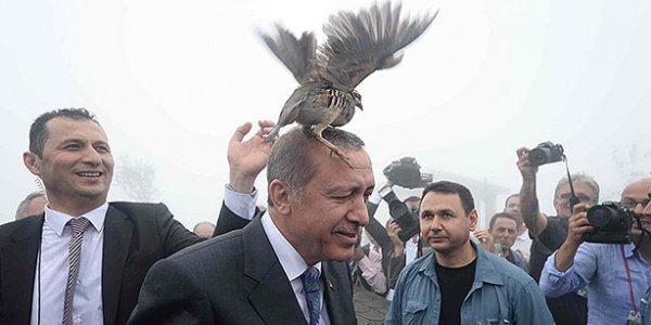 Позже куропатка по собственному желанию покинула голову президента Турции