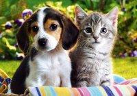 Ученые назвали пять животных, которые могут исцелить человека