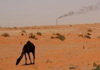 Саудовскую Аравию призвали отказаться от нефти