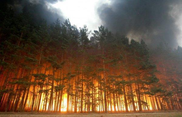 Лесные пожары в Бурятии не повредили жилые дома.