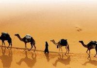 В чем заключался секрет финансового успеха сахабов Пророка (мир ему)?