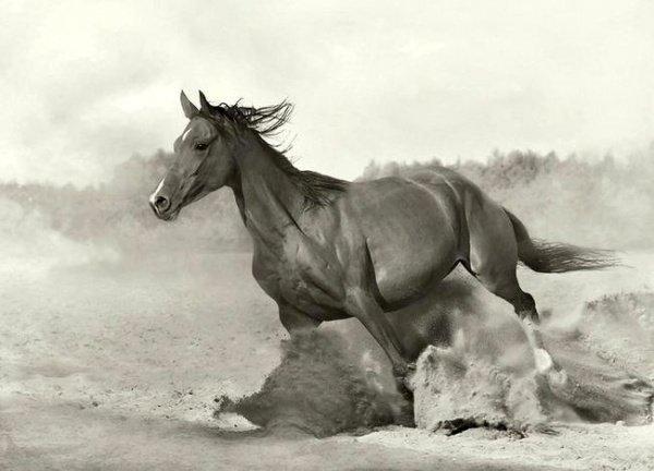 Сколько лошадей было у Пророка Мухаммада (ﷺ) ?