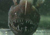Рыбак из Японии поймал двухметрового морского монстра (ФОТО)