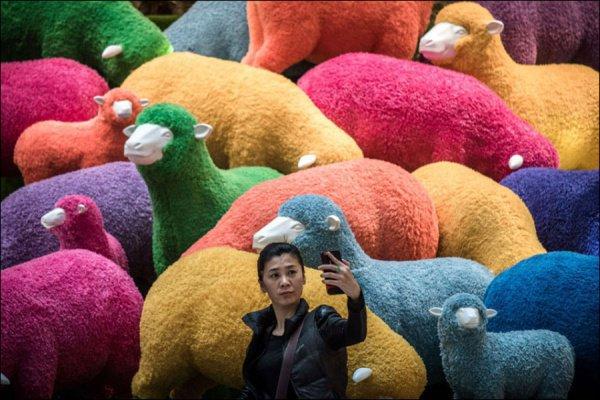 Муфтий Казахстана Ержан Малгажыулы считает недопустимым делать селфи на фоне принесенных в жертву животных во время Курбан-Байрам
