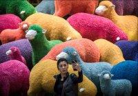 Муфтий Казахстана запретил делать селфи с баранами