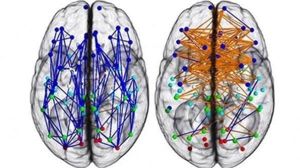 Врожденные различия между мозгом мужчин и женщин
