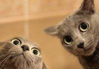Коты распознают выражение лица хозяев, - ученые