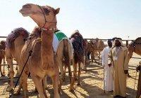 Верблюжье молоко в Россию хотят поставлять ОАЭ
