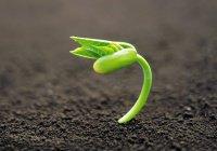 «Неужели после того, как мы станем прахом, мы возродимся в новом творении?»