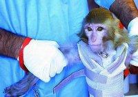 Роскосмос отправит на Марс обезьяну