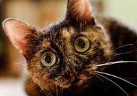 Ученые: Агрессивность котов зависит от окраса