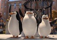 Сотрудники зоопарка сняли на видео побег пингвинов