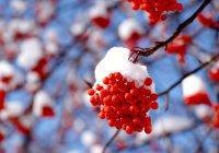 В Казани на выходных ожидаются морозы