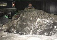 Охотник поймал на Урале кабана весом в 500 кг (ФОТО)