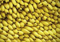 Грибковая инфекция может уничтожить все бананы на планете