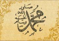 Дерево, с которым Пророк Мухаммад (ﷺ) сравнивал нрав лучших мусульман