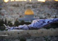 Куфия – символ палестинского противостояния