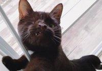 За жизнью американского одноглазого кота следят 6 тысяч подписчиков в Instagram