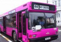 В Египте запустили автобусы для женщин