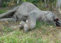Малазийские мусульмане издали фетву против браконьеров