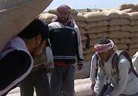 ИГИЛ ввело грабительский налог на сельское хозяйство