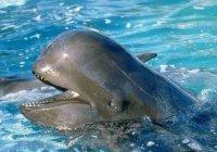 В Индии на берег выбросились более 100 дельфинов