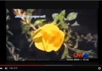 Удивительные кадры: цветы расцветают после звуков азана