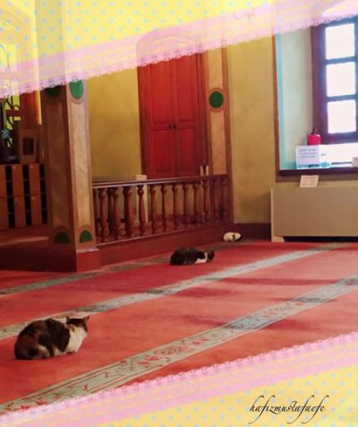 Судить о том, сколько именно кошек нашли приют в мечети, сложно.
