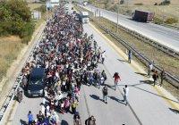 Швеция выдворит 80 тысяч беженцев
