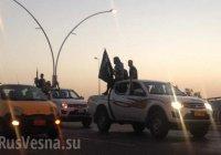 Сирийские курды планируют отобрать у ИГИЛ последний участок сирийско-турецкой границы