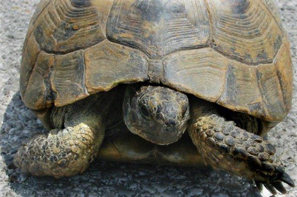 Люди научились готовить черепаховый суп 400 тысяч лет назад.