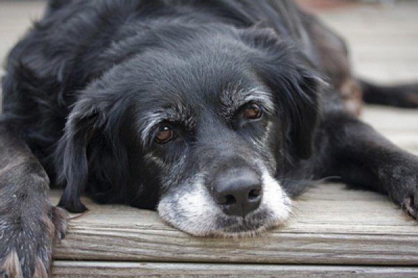 Ученые: Собаки мудреют с возрастом.