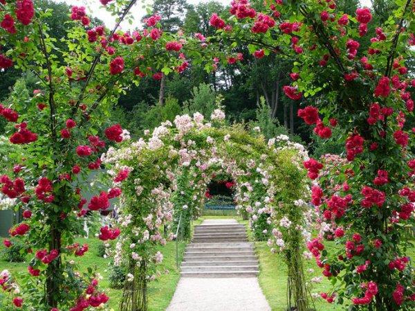 В Крыму построят уникальный ботанический сад роз.