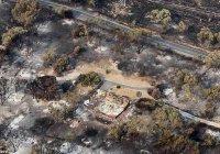 Крупнейший пожар в Тасмании может уничтожить леса времен юрского периода